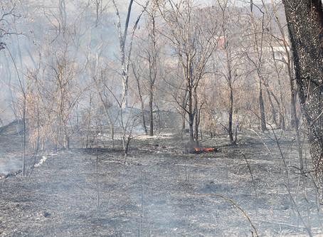Incêndio consome área de transição entre Serrado e Mata Atlântica em Jardinópolis