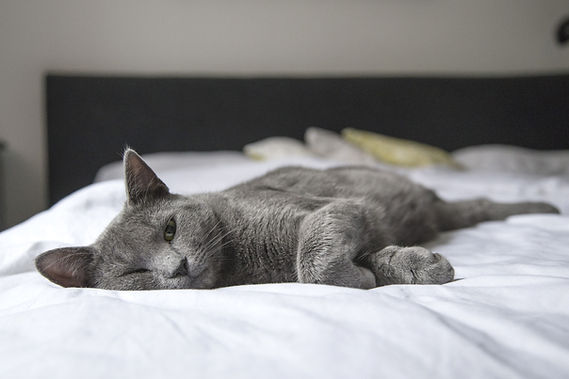 adorable-animal-bed-bedroom-236606.jpg