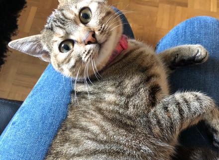 Chat trouvé à Rennes (35)