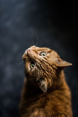 selective-focus-photography-of-cat-82173