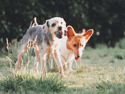 Mettre à jour les coordonnées de son animal