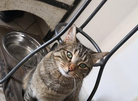 Chat perdu à Beaucaire (30)
