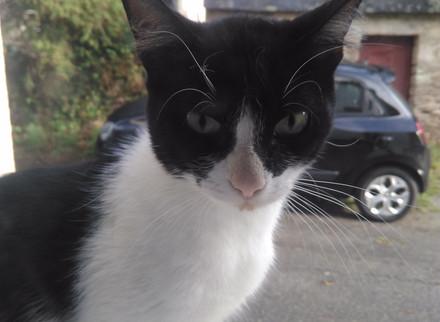 Chat trouvé à Moustoir-Ac (56)