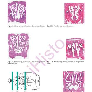 respiratory-system_page_14.jpg