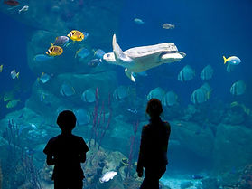 1_national-marine-aquariumJPG.jpg