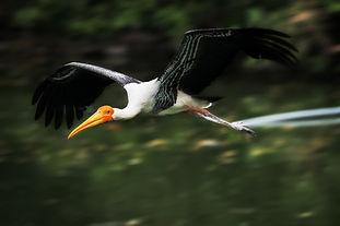 Bharatpur bird-4219900_1920.jpg