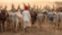 Rabari Herder.jpg
