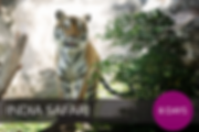 India Safari Thumbnail 01.png