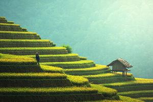Essential-Vietnam.jpg