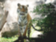 Indian-Safari-Home-Page.jpg
