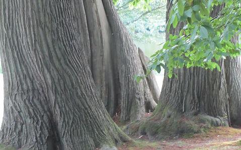 Baum_für_erste_Seite.jpg