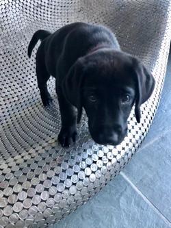 New Pup Nico