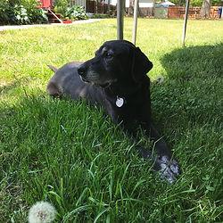 Daisy supervises