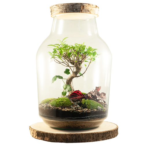 Power of Nature bonsai ecosysteem