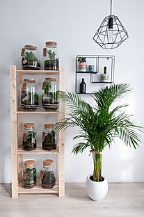 Wardrobe plants.jpg