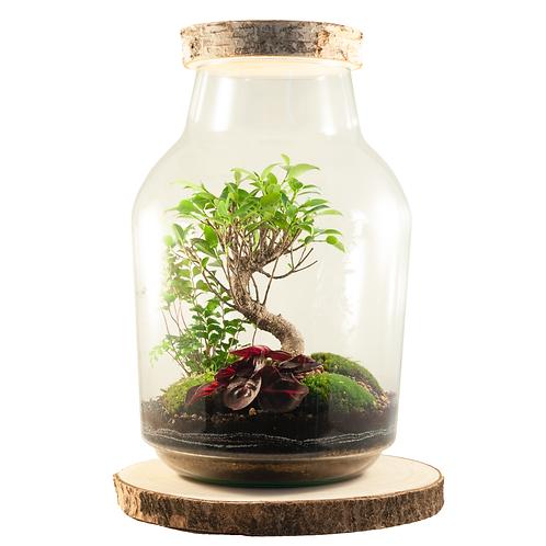 glazen ecosysteem