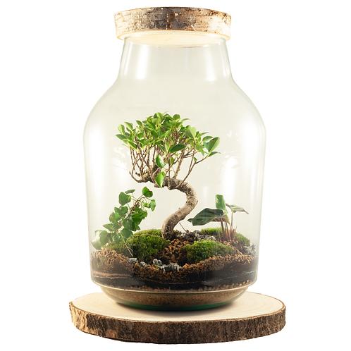 Power of Nature planten terrarium