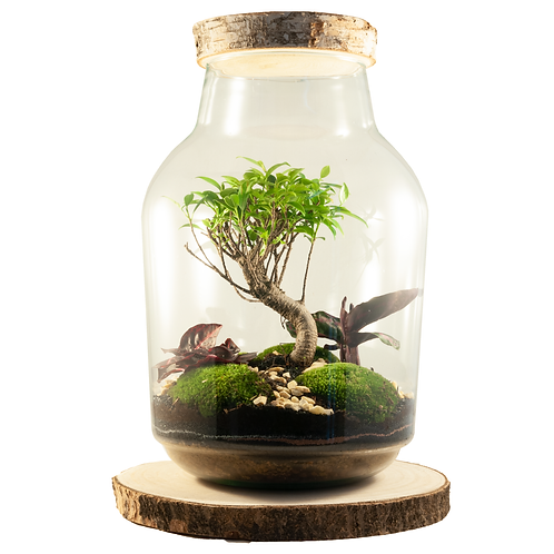 Bonsai ecosysteem