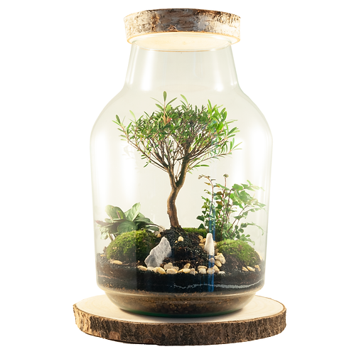 bonsai ecocysteem