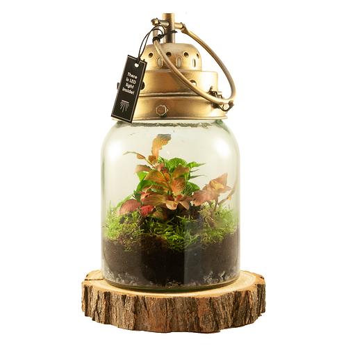 Ecosysteem lantaarn (inc. LED-lampje)