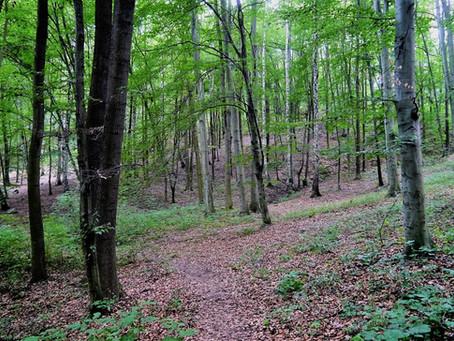 Adéla Humlová: Proč zachovat stromy ve městě