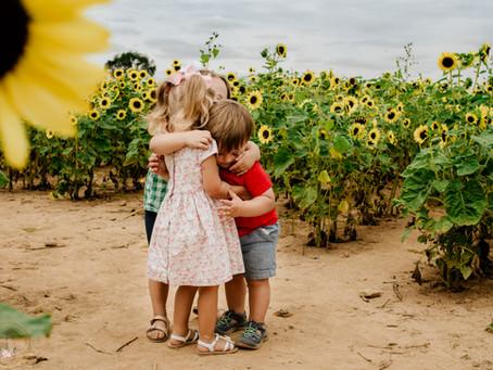 Sunflowers at Shady Brook Farm