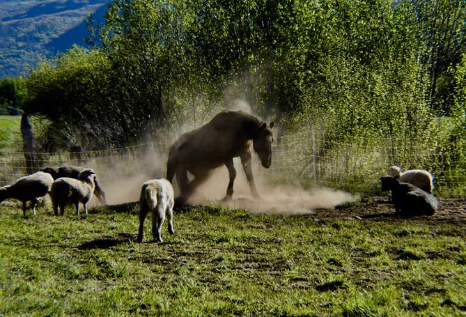 Horse Rising