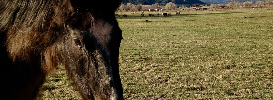 Horse on the Ranch