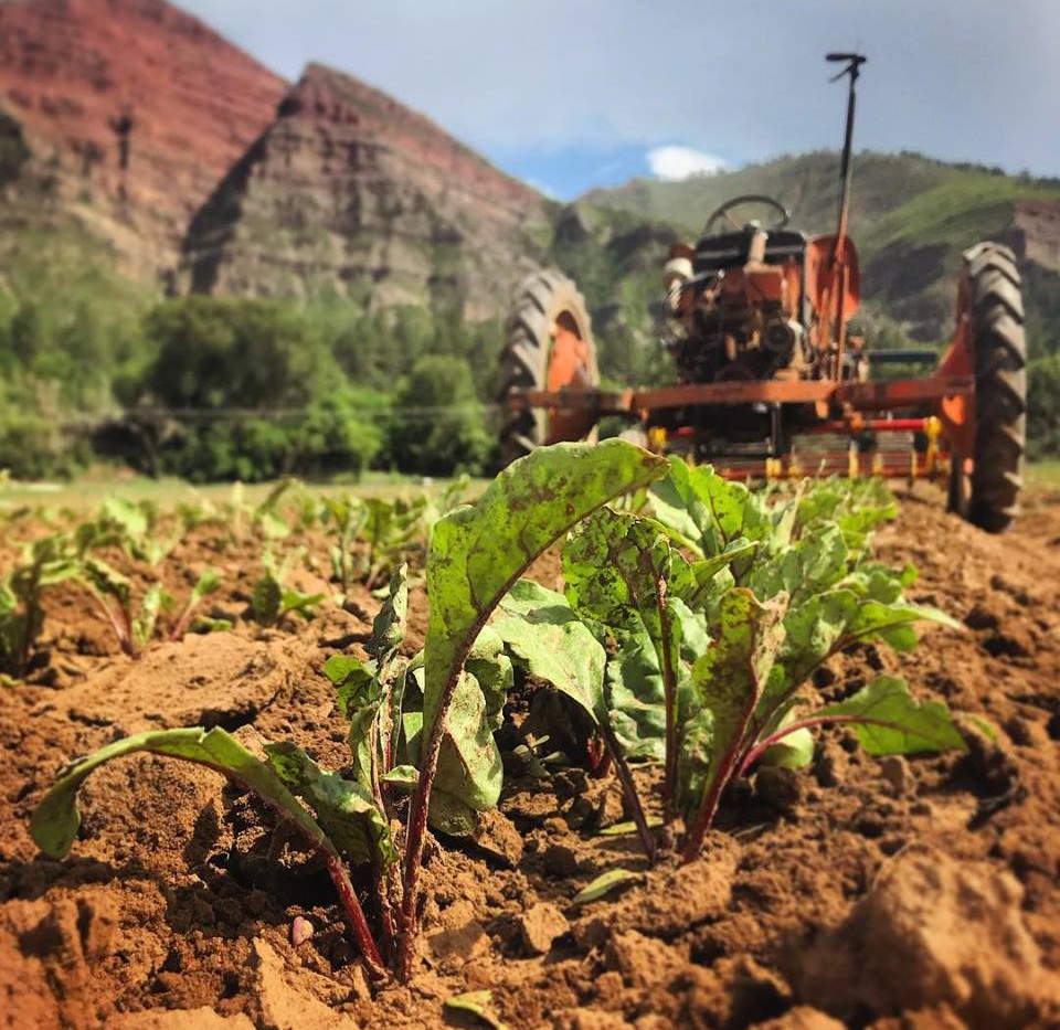 Organic Beets and Tractor