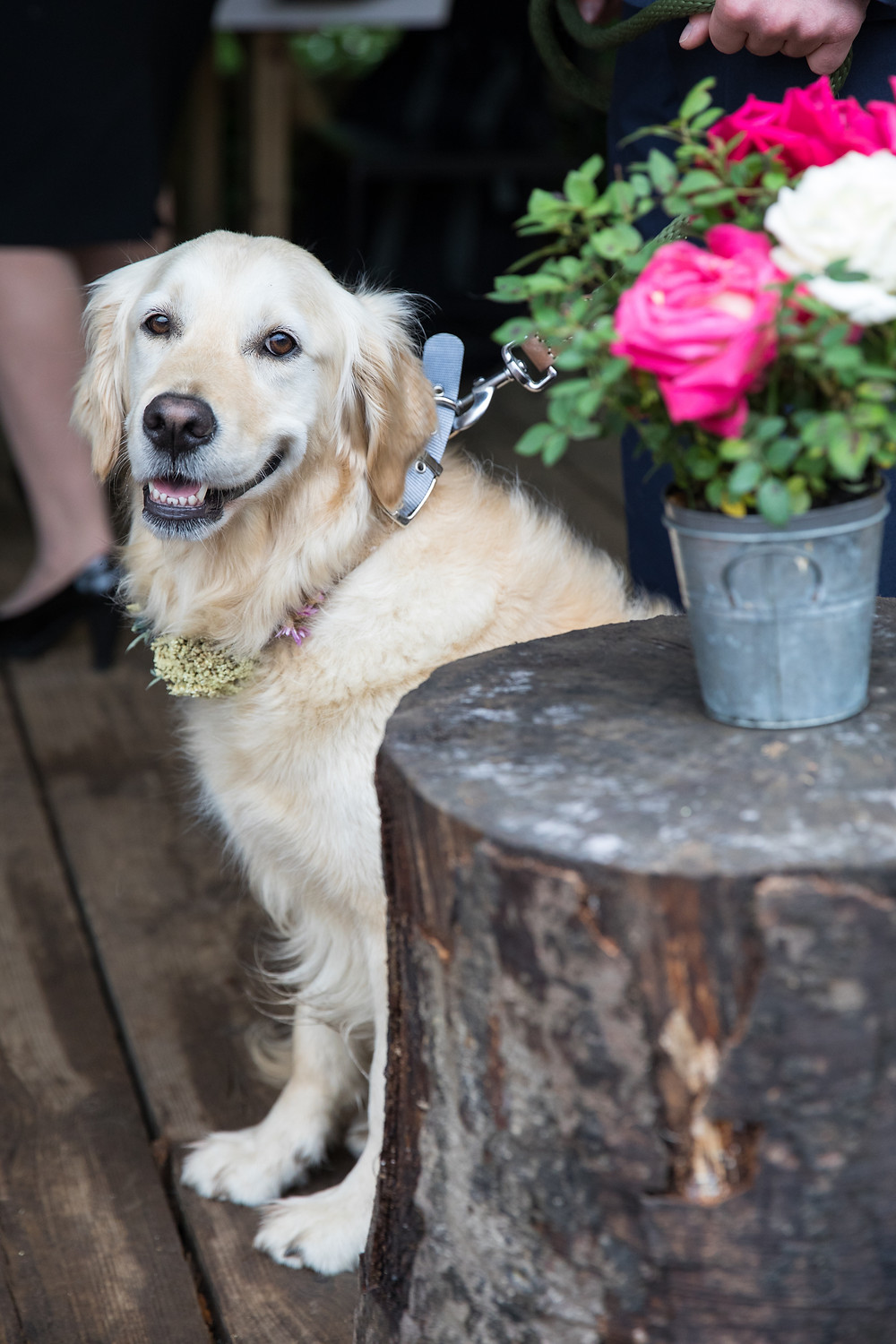 portrait of a dog at a wedding by Jack cook