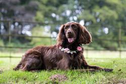 Dog portrait wedding photograph