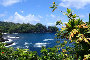 Guided day tours in Hawaii, lush rain forest