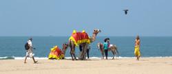 beachcamelindia