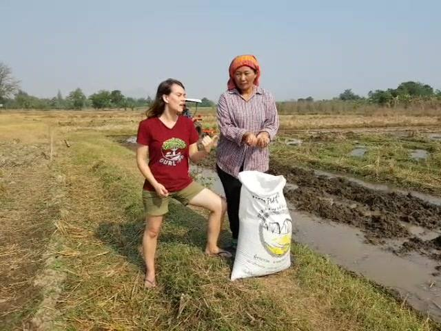 OurLand organic rice project kicks off! We plant rice today!  If you're interested in buying organic rice from us in 90 days, let us know.....we will have 600kgs of it! Or drop by OurLand in 3 months to taste it at the OurLand eco-village!