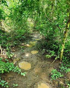 Wild Elephant Footprints
