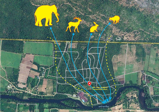 Living in the habitat of the Wild Asian Elephant
