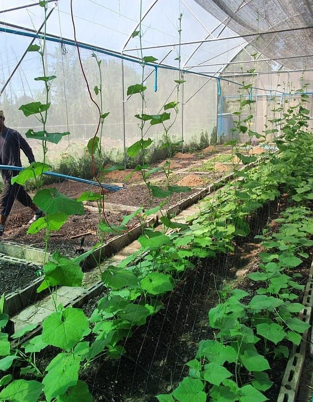 Organic farm greenhouse.jpg