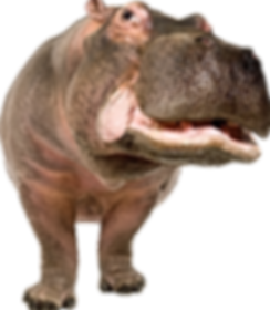 hippo_PNG17.png