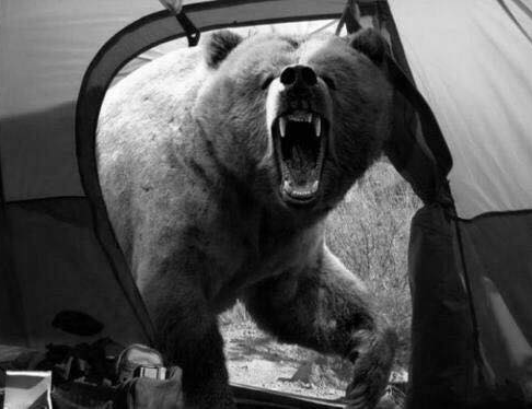 Le fotografie che hanno fatto la storia: La foto dell'orso di Michio Hoshino
