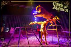 Circo di Mosca - Foto Antonio Ragusi