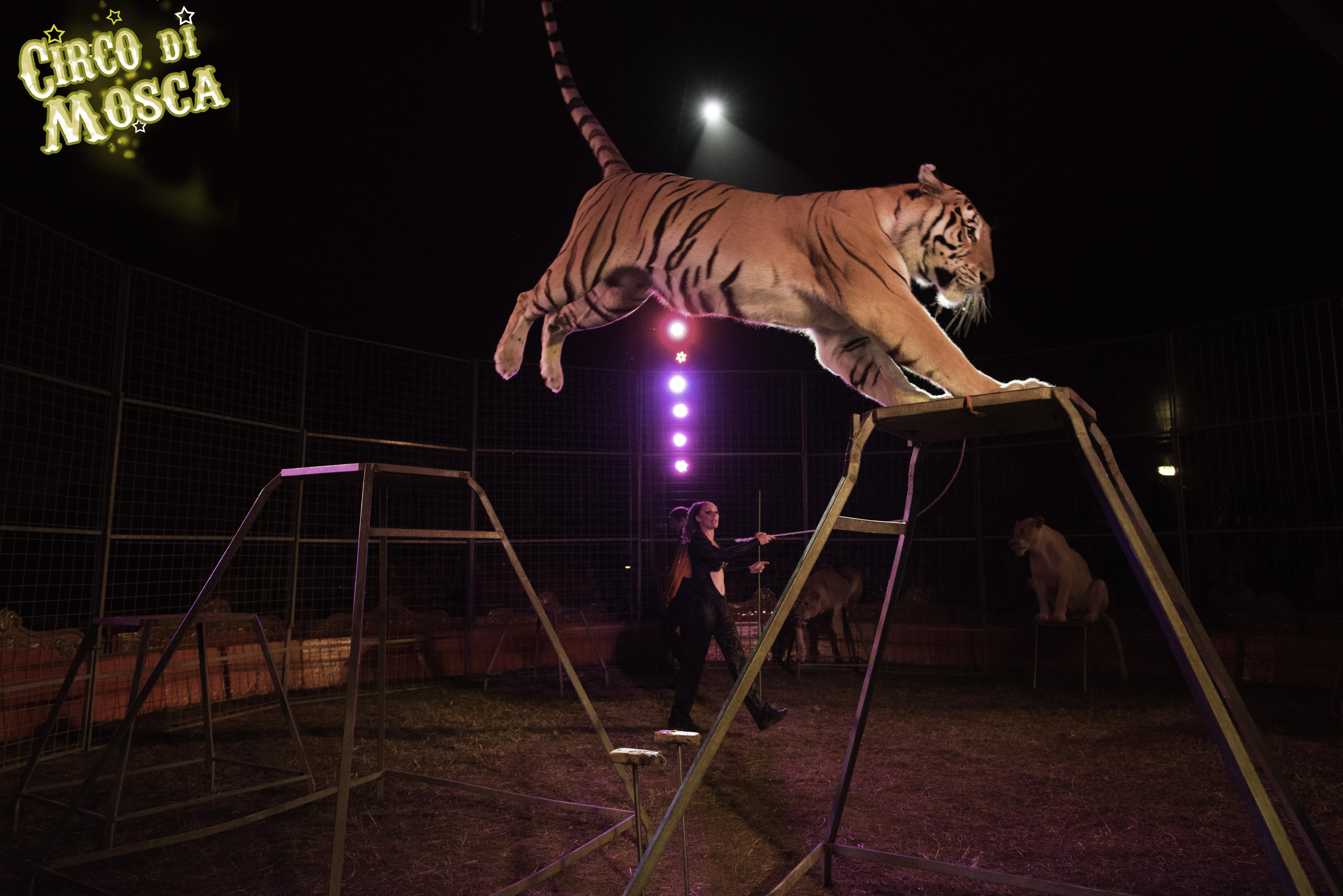 Circo di Mosca - Foto Laura Marchini