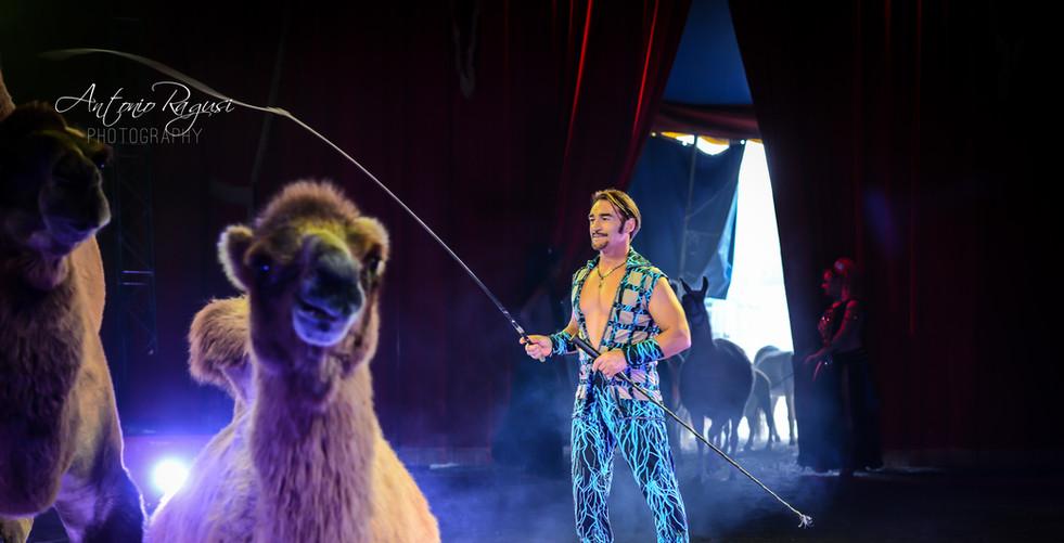 Maya Orfei - Madagascar Circus