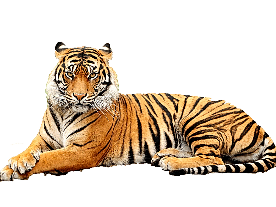 Bengal-Tiger-Transparent-Background.png