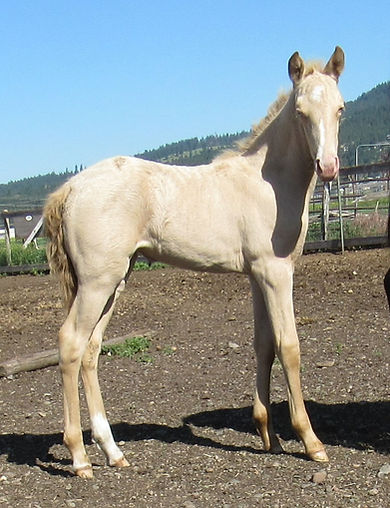 Lacy's 20 filly R.JPG