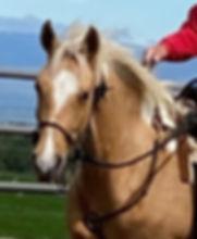 Blonde Under Saddle (3).jpeg
