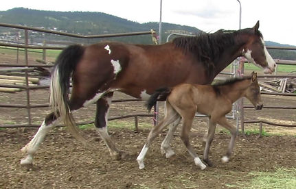 Grand Bay and 20 filly.jpg