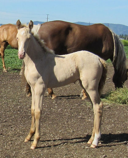 LAcy's 20 filly KL.JPG