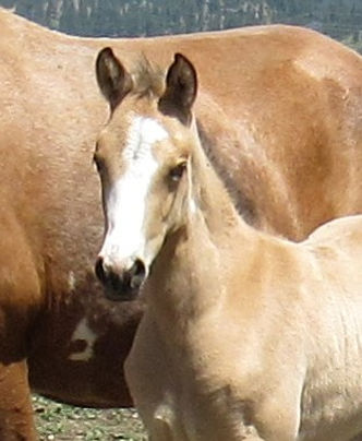 Tannas 20 filly HFA.JPG
