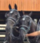 Amish TWH team H front.jpg