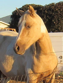 Blondes 20 filly HS.JPG